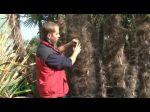 La plantation des palmiers