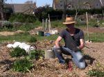 Comment planter les courgettes ?