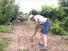 Comment planter du poireau ?