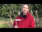 Planter un scion en racines nues