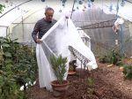 Comment protéger les plantes gélives ?