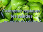 Comment repiquer des salades en période sèche ?