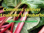 Comment cultiver et récolter la rhubarbe? De la plantation à la compote...