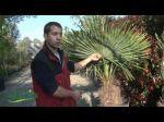 Savoir choisir son palmier