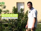 Comment bouturer la spirée, un arbuste très florifère ?