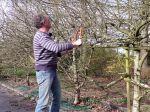 Comment tailler un arbre fruitier négligé ?