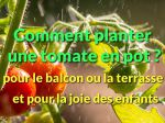Balcon ou terrasse, comment planter des tomates en pot ?