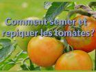 Comment semer et repiquer les tomates ?