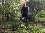 Transplanter un arbre fruitier