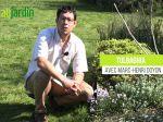 Le Tulbaghia, une plante résistante à la sécheresse