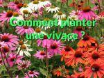Comment planter une vivace en pleine terre ?