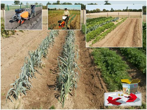 Butter facilement votre jardin - Butter pomme de terre ...