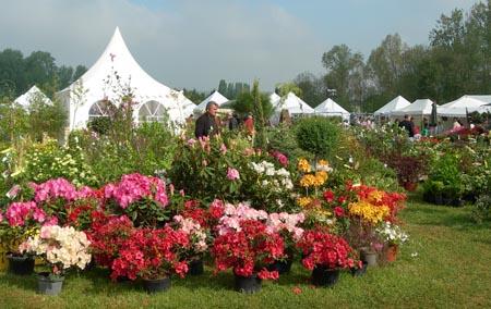 Les fleurs de jardin - Photos de Magnolisafleur