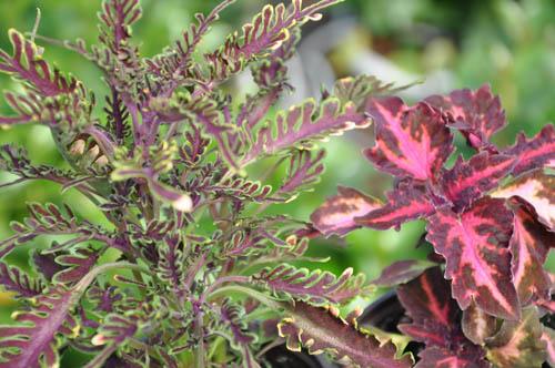Les plantes feuillage un veil des sens au c ur des for Plante et jardins