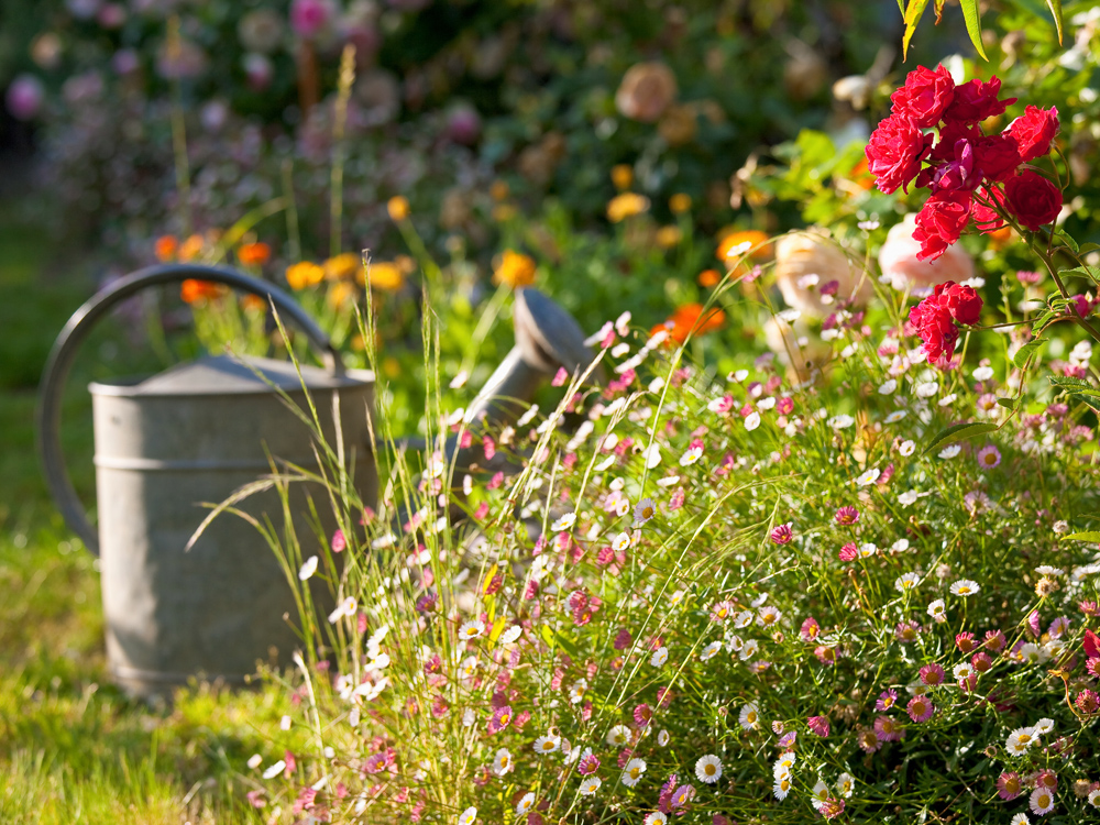 Un jardín