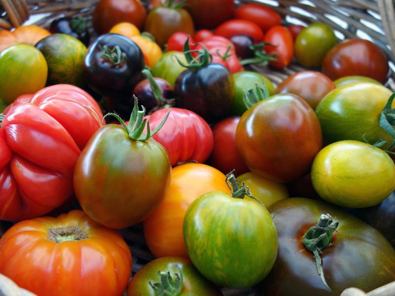 Cesta de tomates reliquia