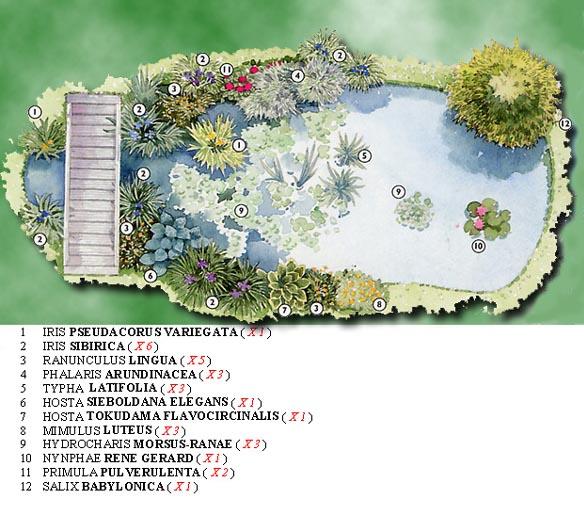 étang De Jardin Idée De Bricolage Avec Un Seau à Ciment Pictures to ...