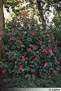 Le jardin des plantes de Nantes (44)