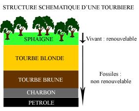 Structure d'une tourbière