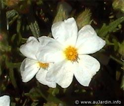 La flore méditerranéenne