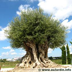 L 39 arbre remarquable for Jardin remarquable ile de france