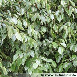 Les plantes d polluantes d 39 int rieur - Plante interieur anti humidite ...