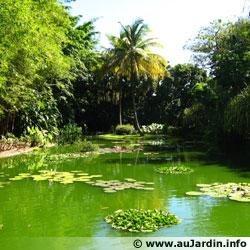 Le jardin botanique de Deshaies en Guadeloupe, l'étang aux nénuphars