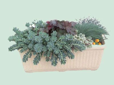 Jardini res aux feuillages persistants for Plante jardiniere hiver