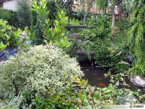 Jardin le clos fleuri chabeuil 26 for Haie jardin anglais