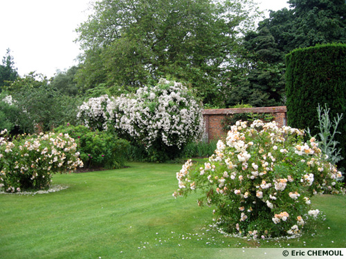 Les jardins du bois des moutiers 76 for Plante et jardins