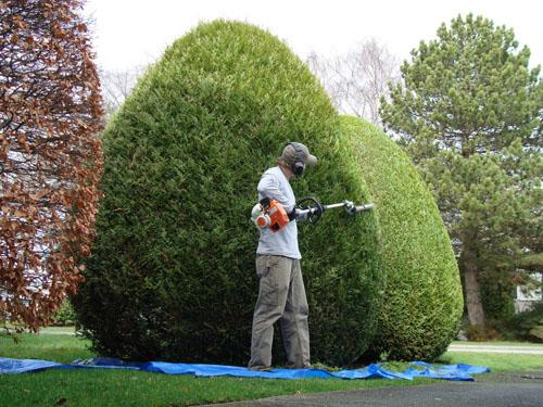 Jardinier proximit services 45 for Le jardinier