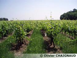 La vigne avant levage
