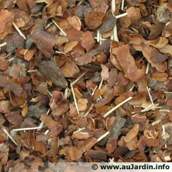 les coques de cacao