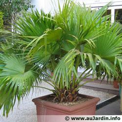 L 39 hivernage des plantes en pot - Petit arbre d interieur ...