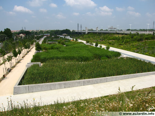The phytoremediation is implanted in the Nanterre island park (FR)