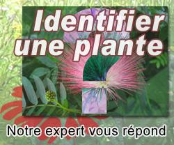 Identifier une plante